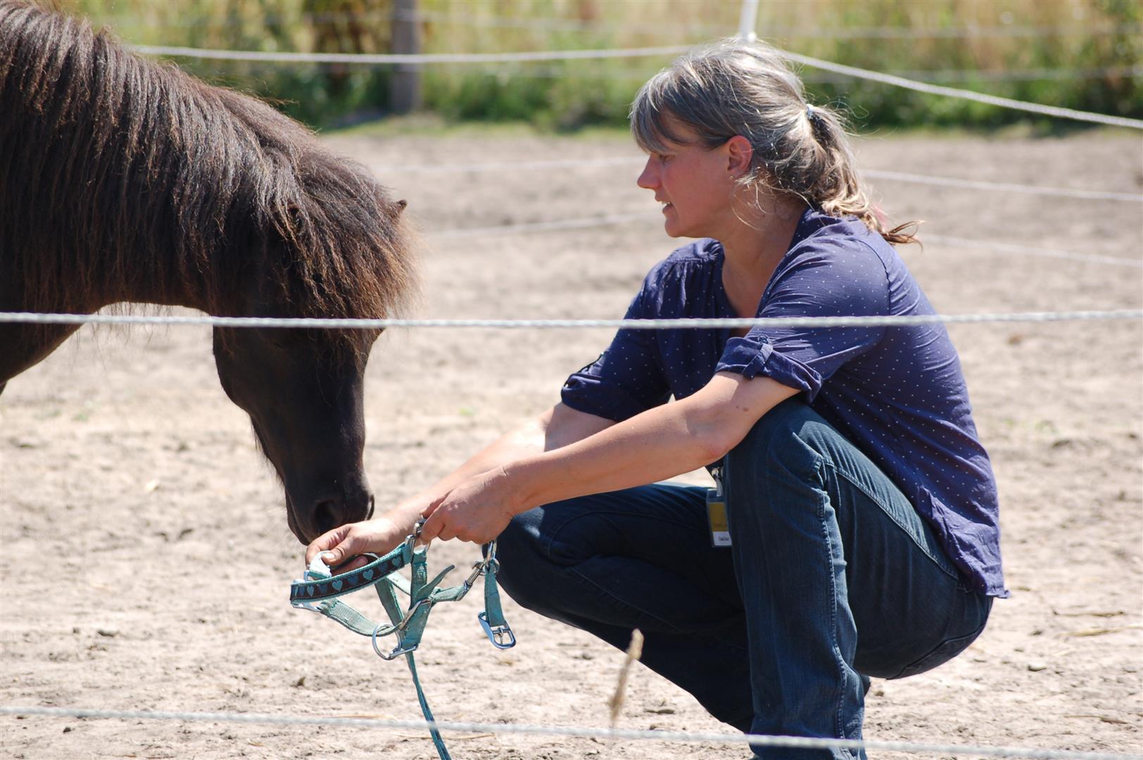 Pony steckt Nase in das Halfter