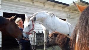 Claudia Schulz inmitten ihrer vier Trainingspferde