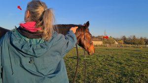 Rücken eines Menschen und Kopf eines Pferdes, die beide in unterschiedliche Richtung blicken, rote Pfeile verdeutlichen die Blickrichtung